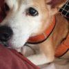 水素水って犬にも効果あるのだろうか?