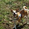 保護犬と暮らす幸せ