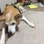 老犬介護に油断は大敵