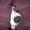 冬も犬の脱水には気をつけるべし