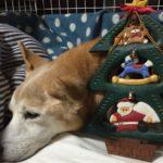 犬を愛する全ての皆さまへ メリークリスマス♪