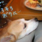 念願の卵焼きフライパーン!