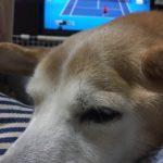 テニス中継に集中できない理由