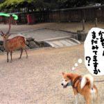 なんだかんだ言ってもやっぱり奈良は鹿♪